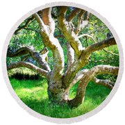 Tree In Golden Gate Park Round Beach Towel