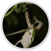 Tree Snake Eating Gecko Round Beach Towel