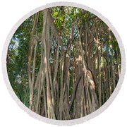Trees With Aerial Roots At The Coba Ruins  Round Beach Towel