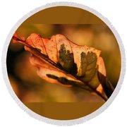 Tri-color Beech In Autumn Round Beach Towel