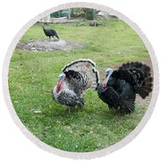 Turkeys In The Yard At Laguna Guerrero Round Beach Towel