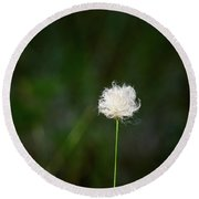 Tussock Cottongrass Round Beach Towel