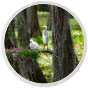 Two Baby Great Egrets And Nest Round Beach Towel