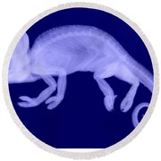 Veiled Chameleon X-ray Round Beach Towel