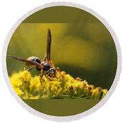 Wasp On Wildflower Round Beach Towel