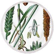 Wheat, Triticum Vulgare Round Beach Towel