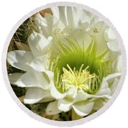 White Cactus Flower Round Beach Towel