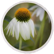White Coneflower Round Beach Towel