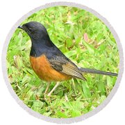 White-rumped Shama Round Beach Towel