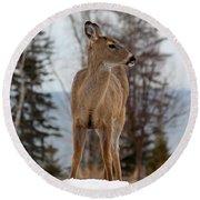 White-tailed Deer Three Round Beach Towel