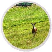 Whitetail Deer And Hay Rake Round Beach Towel