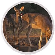 Whitetail Deer At Waterhole Texas Round Beach Towel by Dave Welling