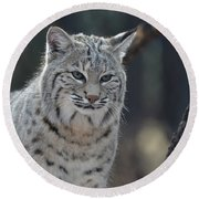 Wild Lynx Cat Round Beach Towel
