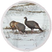 Wild Turkey - Meleagris Gallopavo Round Beach Towel