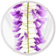 Wisteria Flowers, X-ray Round Beach Towel