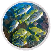 Yellow And Blue Striped Sweeltip Fish Round Beach Towel