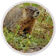 Yellow-bellied Marmot Round Beach Towel