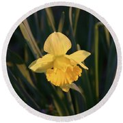 Yellow Daffodil Round Beach Towel