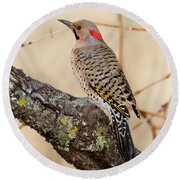 Yellow-shafted Northern Flicker Round Beach Towel