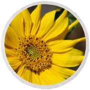 Yellow Sunflower Round Beach Towel