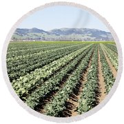 Young Broccoli Field For Seed Production Round Beach Towel