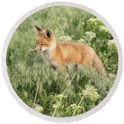 Young Red Tailed Fox Round Beach Towel