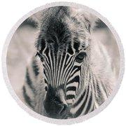 Zebra Colt In Spring Round Beach Towel
