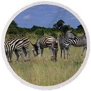 Zebra Group Round Beach Towel