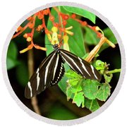 Zebra Longwing On Firebush  Round Beach Towel
