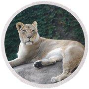 Zoo Lion Round Beach Towel