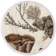 Aquatic Animals - Seafood - Algae - Seaplants - Coral Round Beach Towel