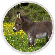 Miniature Donkey Foal Round Beach Towel