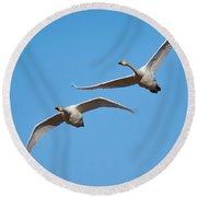Whooper Swans Round Beach Towel