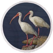 100b5790 White Ibis Round Beach Towel