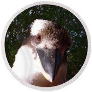 Australia - Kookaburra Looking Right At You Round Beach Towel