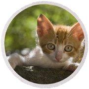 Kitten On A Wall Round Beach Towel