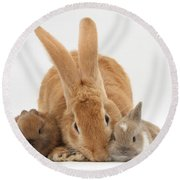 Rabbits Round Beach Towel by Mark Taylor