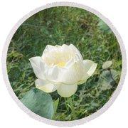 White Lotus Flower Flower Lotus Nature Summer Green Plant Blossom Asian Round Beach Towel