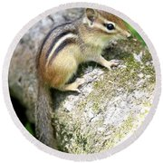 Chipmunk Round Beach Towel