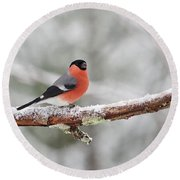Eurasian Bullfinch In Winter Round Beach Towel