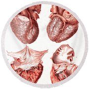 Heart, Anatomical Illustration, 1814 Round Beach Towel