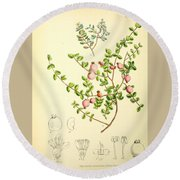 Illustrations Of The Flowering Plants And Ferns Of The Falkland Islands Round Beach Towel