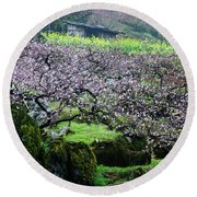 Blossoming Peach Flowers In Spring Round Beach Towel