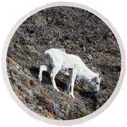 Dahl Sheep, Turnigan Arm Round Beach Towel