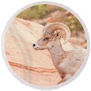 Desert Bighorn Ram Round Beach Towel