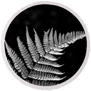 Fern Close-up  Round Beach Towel