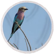 Lilac Breasted Roller On Alert Round Beach Towel