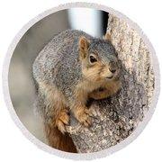 Squirrel Round Beach Towel