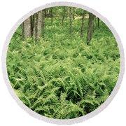 146112 Ferns In Pisgah Nat Forest V Round Beach Towel