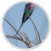 Lilac Breasted Roller 2 Round Beach Towel